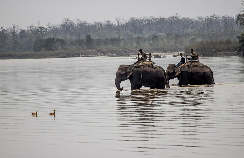 World Heritage Site -Chitwan National Park