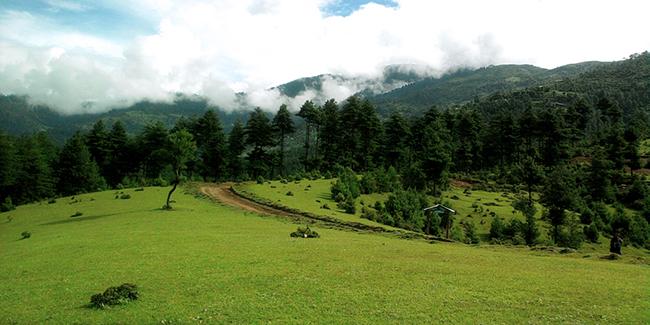 Picture of 'Green Jiri' by Nirmal